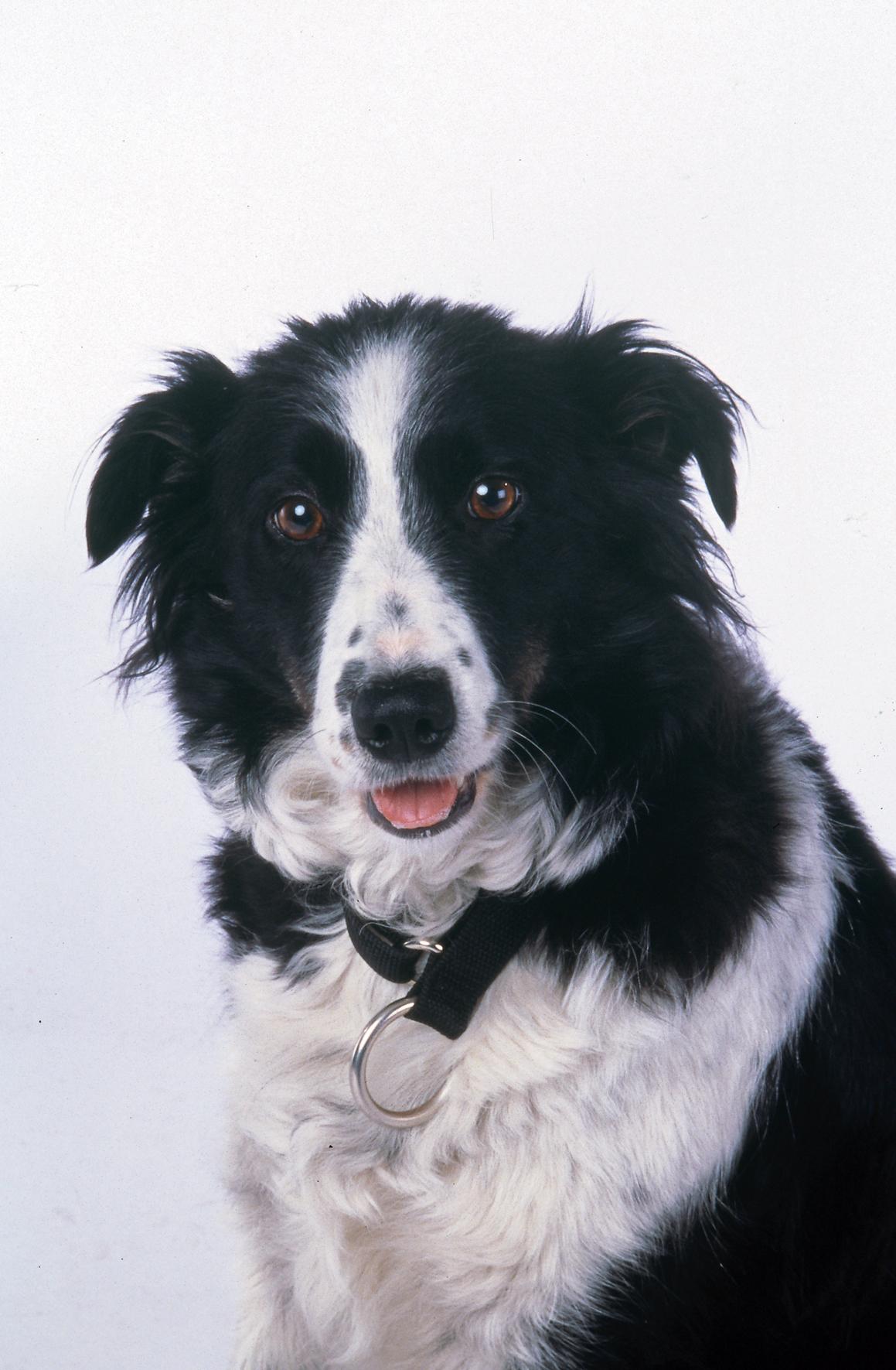 Snow Dogs 2002  IMDb
