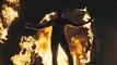 Trailer V for Vendetta