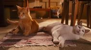 Trailer Cats & Dogs: The Revenge of Kitty Galore