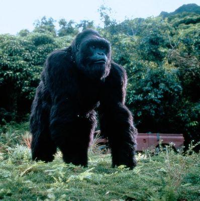 Joe Gorilla Movie