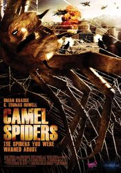 Poster Camel Spiders