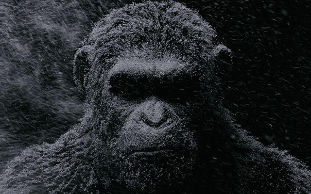 Film - Planeta Maimuţelor: Războiul