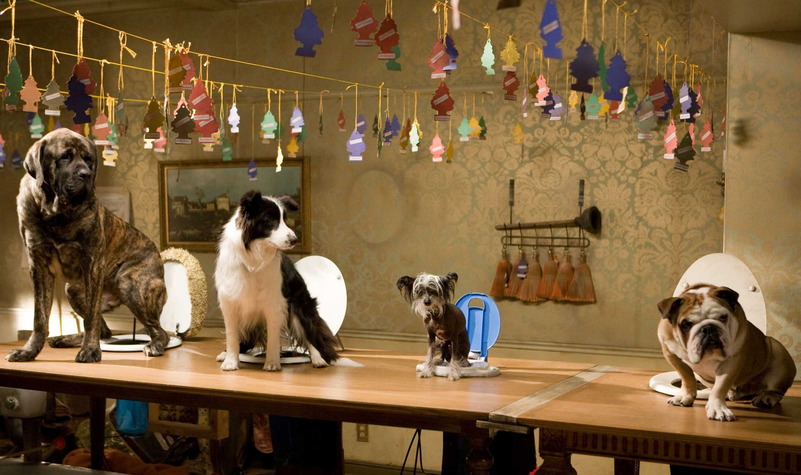 картинки отель для собак всех возрастов