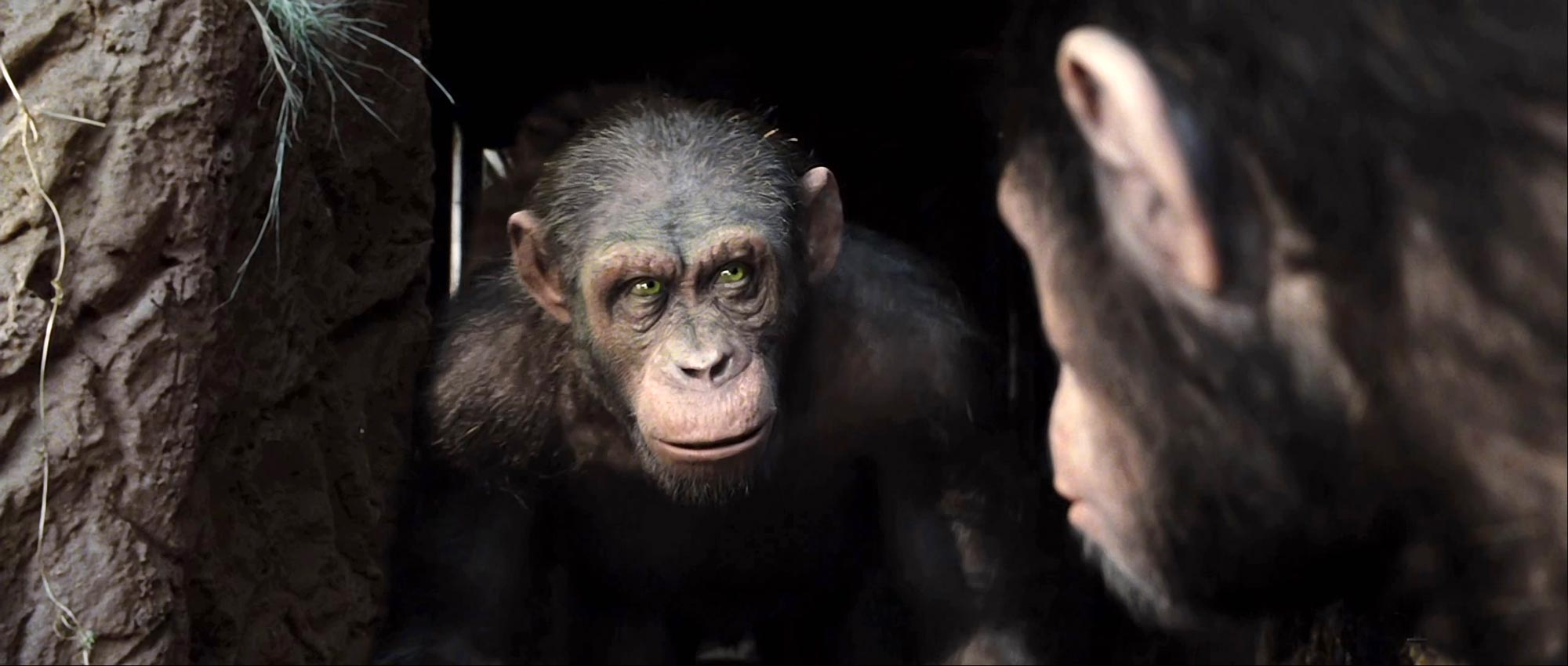 rise of the planet of the apes 2011-08-11  the prequel to the charlton heston classic may not be quite so brilliant as its predecessor, but is still a cheerfully entertaining satire, writes peter bradshaw.