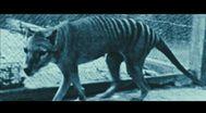 Trailer The Hunter