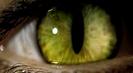 Trailer film Catwoman
