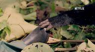 Trailer Virunga