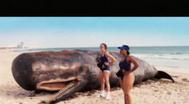 Trailer Reno 911!: Miami