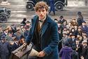 Articol Fantastic Beasts and Where to Find Them va fi o trilogie, confirmă J.K. Rowling