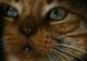 10 pisici nemuritoare din filme