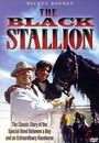 Film - The Black Stallion