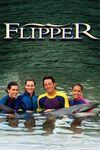 Noile aventuri ale lui Flipper