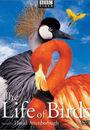 Film - The Life of Birds