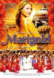 Poster Marigold