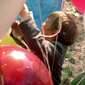 Le ballon rouge/Balonul roșu