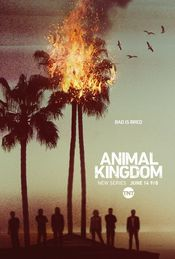 Poster Animal Kingdom