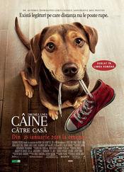 A Dog's Way Home - Drumul unui câine către casă