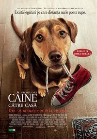 Poster DRUMUL UNUI CAINE CATRE CASA - DUBLAT