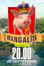 Poster Mangalița
