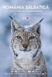 Poster România sălbatică